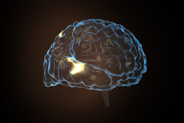 neurotransmisores hormonas